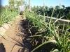 04 huertos tombalolla en febrero