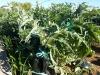06 huertos tombalolla en febrero