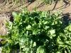 07 huertos tombalolla en febrero