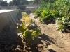 08 huertos tombalolla en febrero