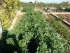 09 huertos tombalolla en febrero