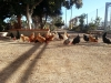 11 huertos tombalolla en febrero