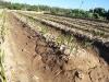 13 huertos tombalolla en febrero