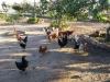 14 huertos tombalolla en febrero