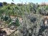 15 huertos tombalolla en febrero