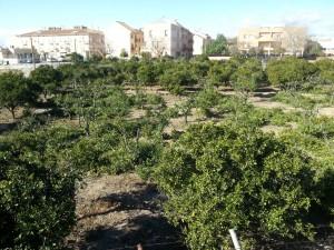 162-ampliacion horts tombalolla meliana